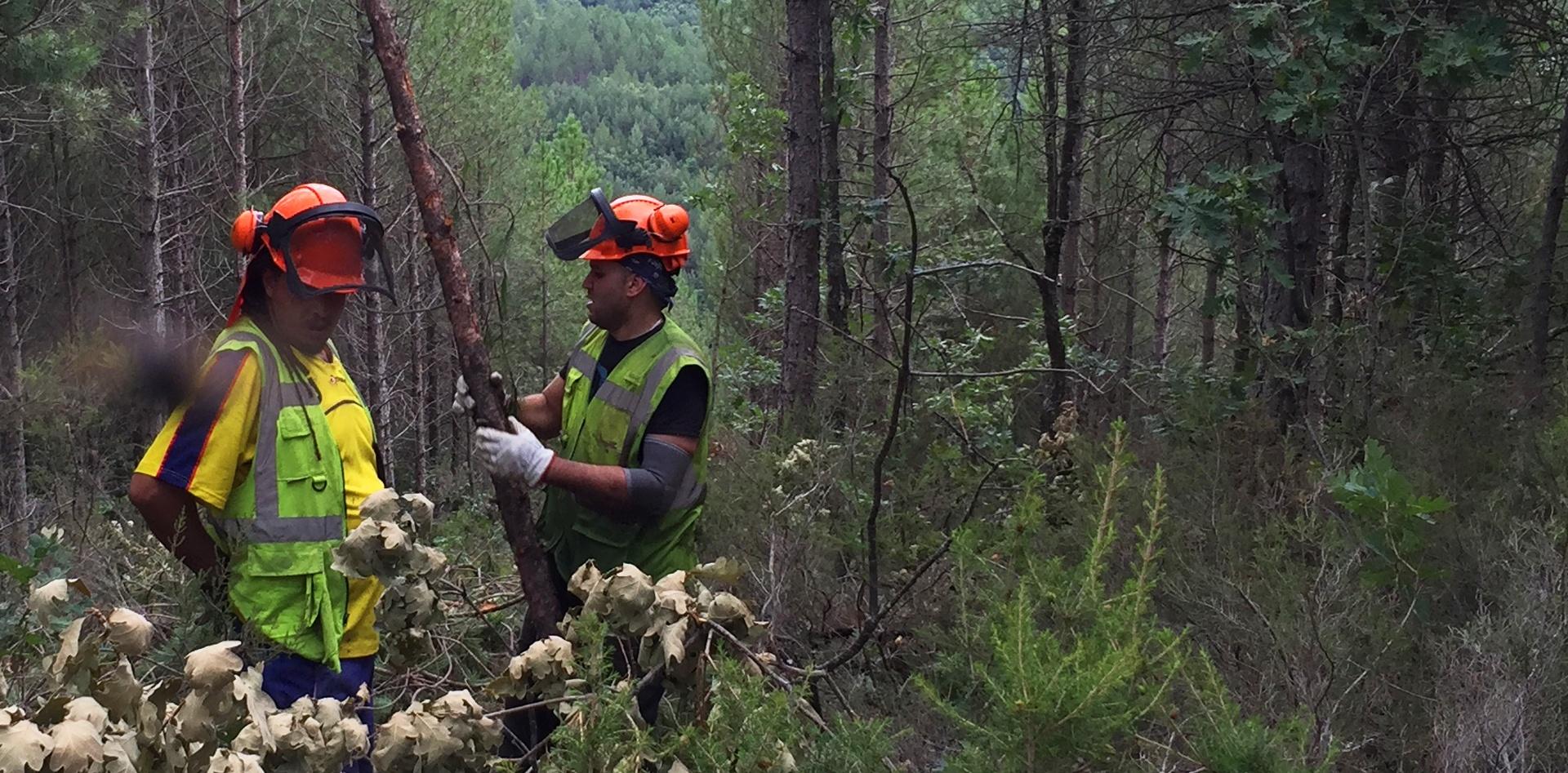 Servicios forestales en León